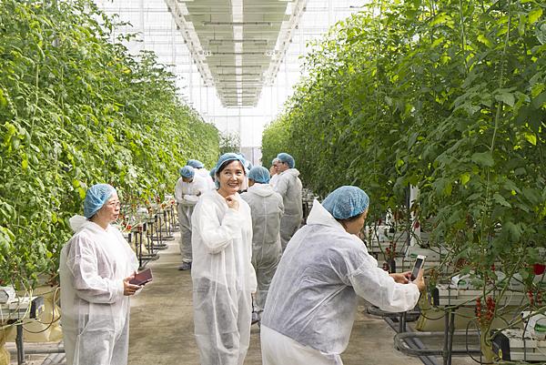 番茄方舟獨家「琥番茄」發表 茄紅素倍增高營養價值4.png