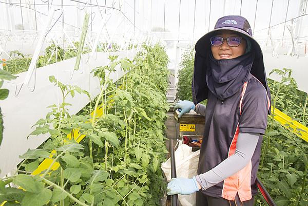 番茄方舟獨家「琥番茄」發表 茄紅素倍增高營養價值5.png