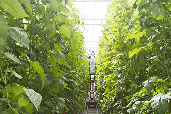 番茄方舟獨家「琥番茄」發表 茄紅素倍增高營養價值6.png