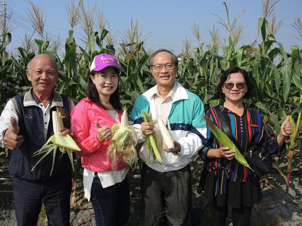 二水農會採玉蜀黍做公益 玉米每穗5元撿便宜做愛心1.png