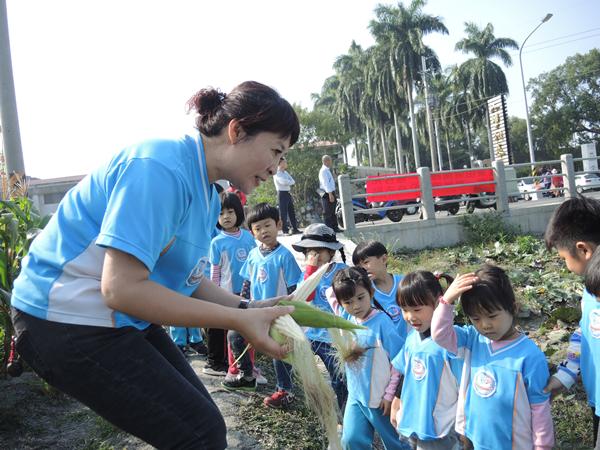 二水農會採玉蜀黍做公益 玉米每穗5元撿便宜做愛心6.png