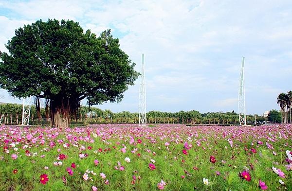 彰化溪州公園花卉3.png