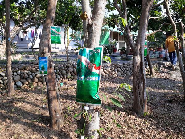 吊點滴的樹竟錢途無量 沉香培育園區藏匿社頭鄉山區7.png