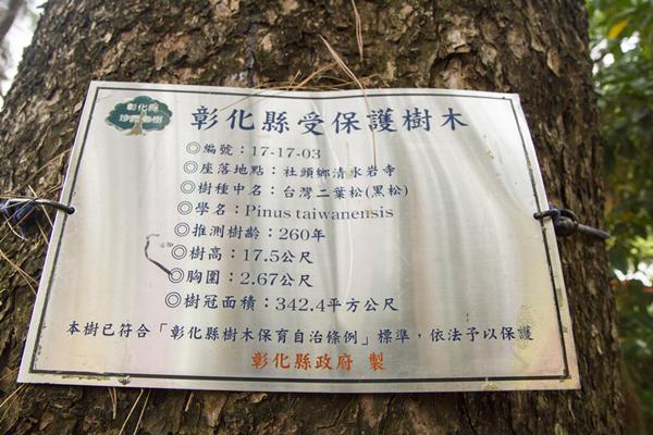 彰化清水岩寺老松樹染松材線蟲 樹醫師緊急吊點滴搶救7.png