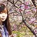 芬園花卉園區賞櫻 一睹櫻花嬌顏1.png