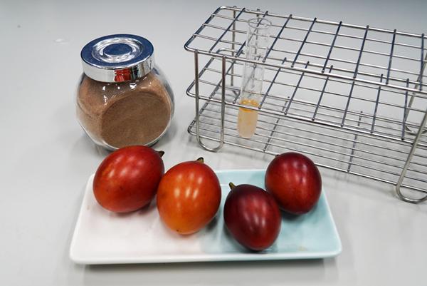 大葉大學藥保系研究樹番茄萃取物在傷口敷料的應用.png