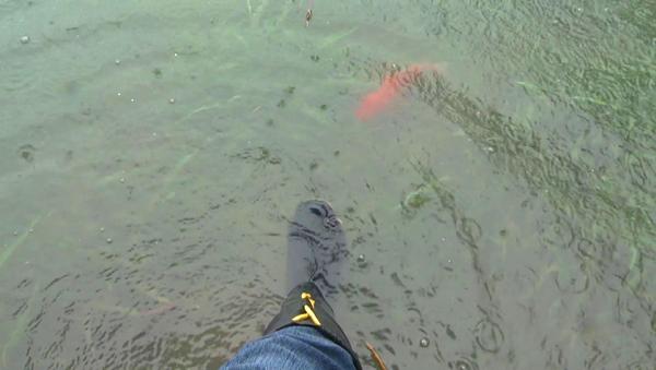 彰化市景觀公園淹水拉封鎖線 魚兒都游上岸了3.png
