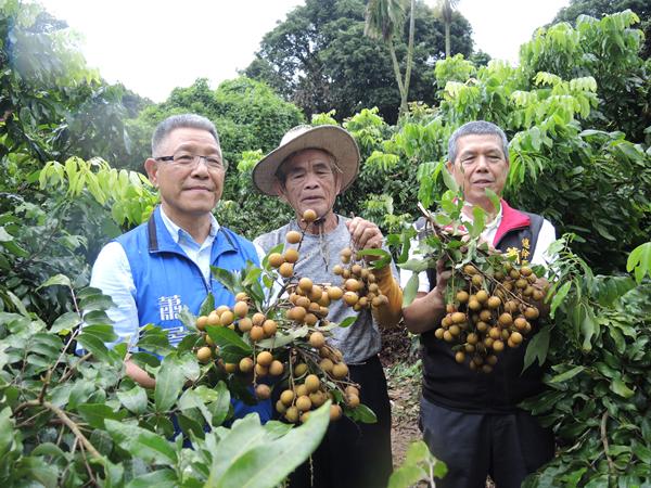 龍眼果樹矮化管理技術推廣 助果農穩定龍眼產量與品質1.png