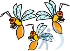 高雄除害蟲公司虎頭蜂知識