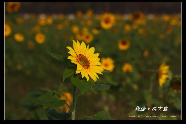IMG_4177.jpg