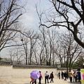 景福宮也要櫻花季了