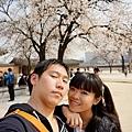 櫻花~~~