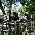 六福村野生世界