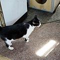 終於看到貓咪