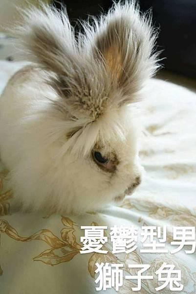 憂鬱獅子兔.jpg