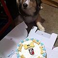 帝帝1歲生日