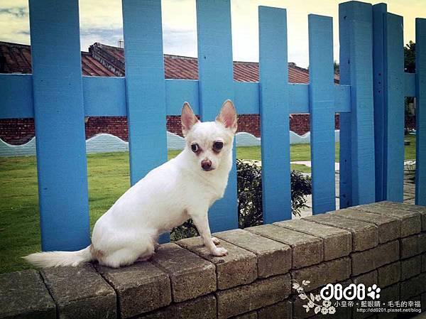 台南大內-寵物友善民宿【星星的鄰居】