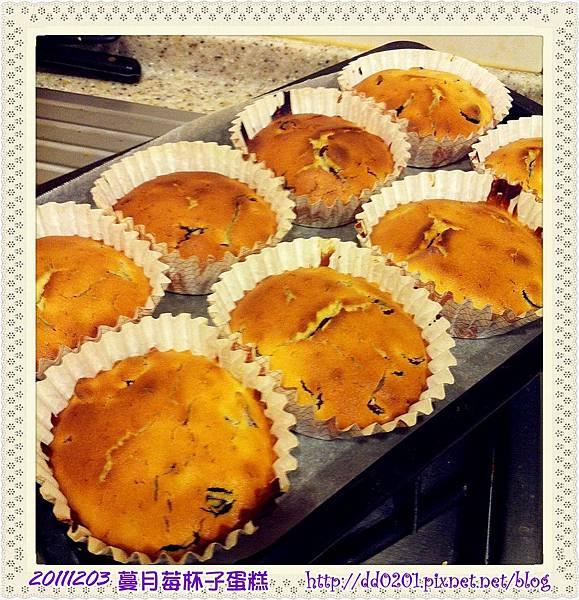 20111203蔓越莓杯子蛋糕
