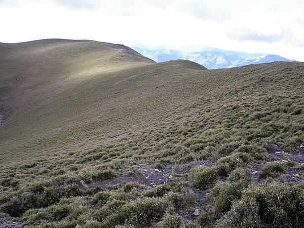 綿延的草坡