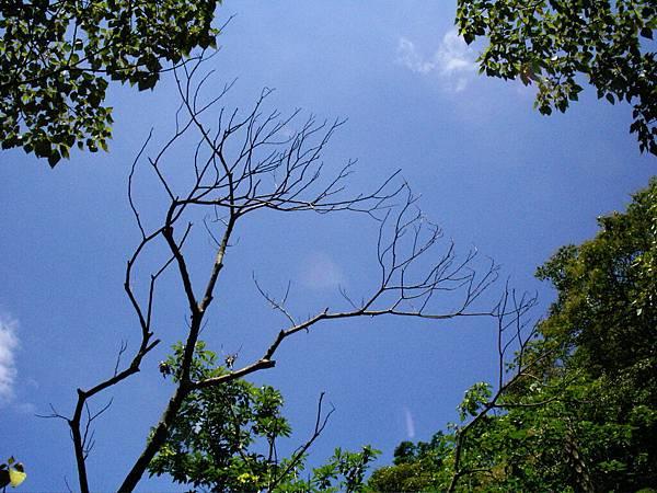 優美的樹形,居然有點像演化樹.....