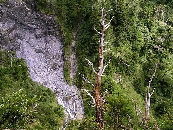 深谷瀑布與枯木