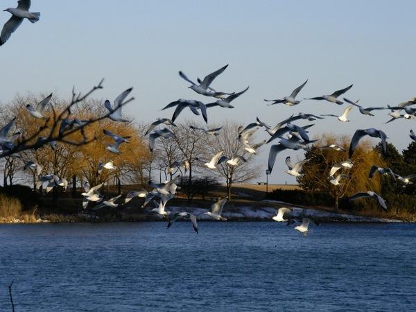 成群的水鳥飛起