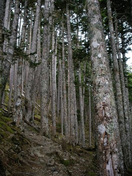 名聞遐邇黑森林