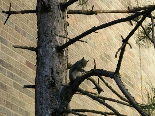 樹上的松鼠