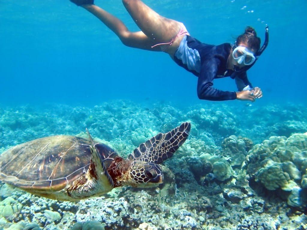 Heidi&Turtle