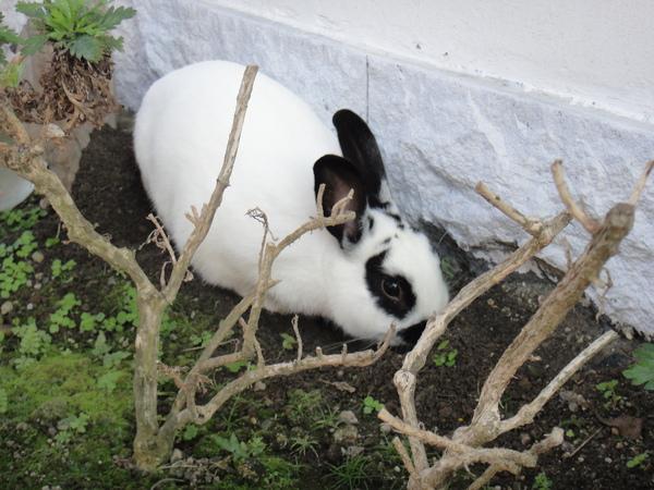我家的兔子在挖土~