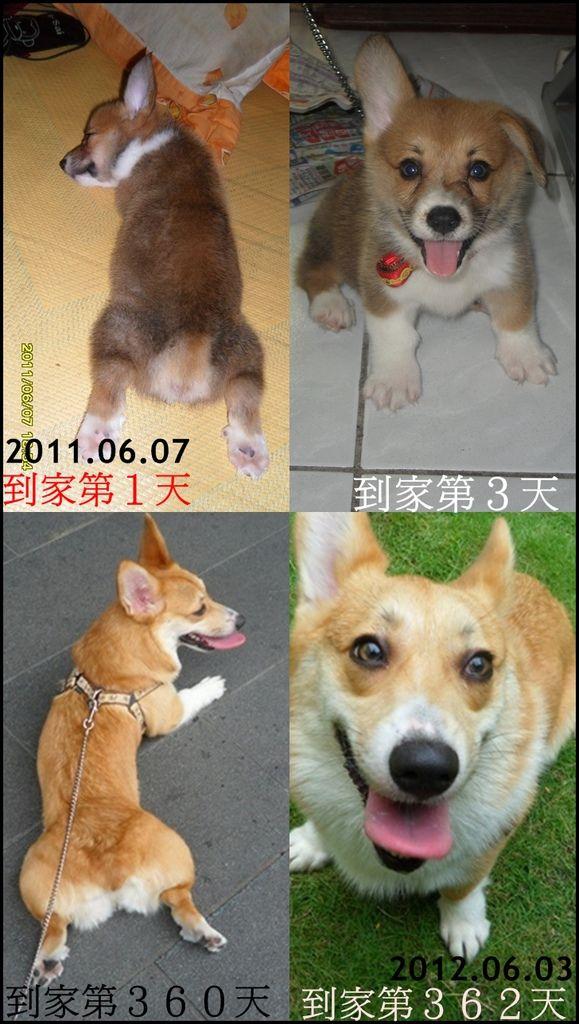 1週年(100~101)