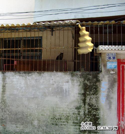 20110923小虎斑.JPG