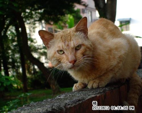 20110613橘