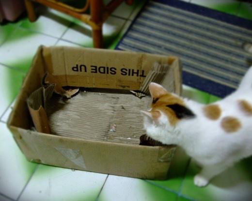 2013-小虎BOX.JPG