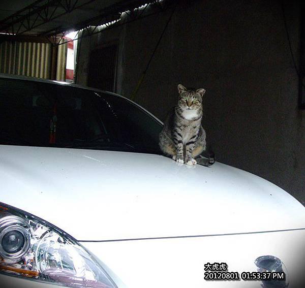 201208-大虎.JPG