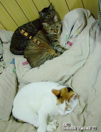 20101222-3CATS.JPG