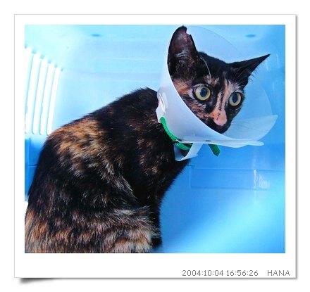 http://blog.sina.com.tw/myimages/135/8071/images/hana1004.JPG