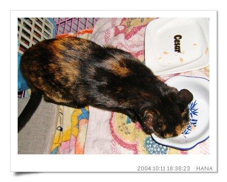 http://blog.sina.com.tw/myimages/135/8071/images/hana1011eat.JPG