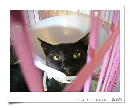 http://blog.sina.com.tw/myimages/135/8071/images/TNR-HEYMA.JPG