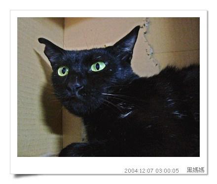 http://blog.sina.com.tw/myimages/135/8071/images/TNR-HEYMA3.JPG