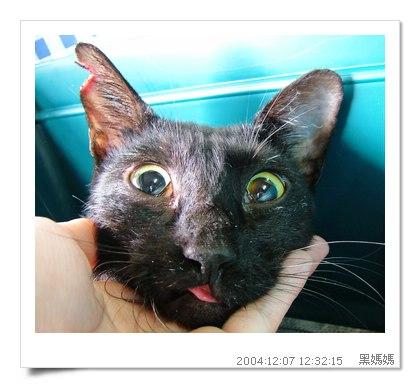 http://blog.sina.com.tw/myimages/135/8071/images/TNR-HEYMA5.JPG