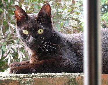 catnews-2.JPG