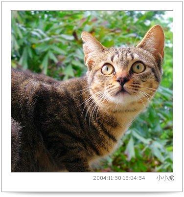 catnews-3.JPG