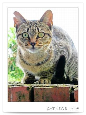 catnews-4.JPG