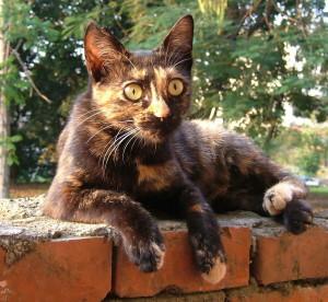 http://blog.sina.com.tw/myimages/135/8071/images/0511hana.JPG