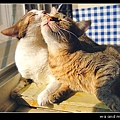 http://blog.sina.com.tw/myimages/55/9015/images/0716-enemy1.JPG