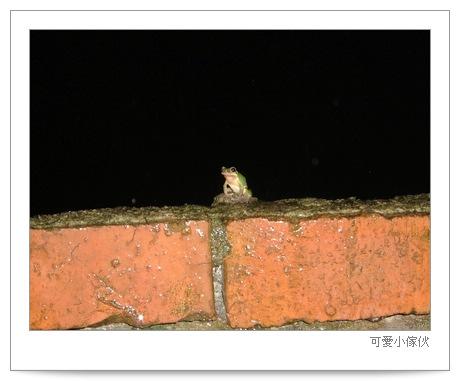 050831-frog1.jpg