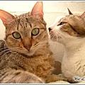 http://blog.sina.com.tw/myimages/135/8071/images/1142630490_2.jpg
