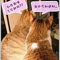 http://blog.sina.com.tw/myimages/135/8071/images/1143437225_0.jpg