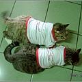 http://blog.sina.com.tw/myimages/135/8071/images/1157403012_4.jpg
